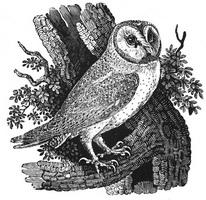 Иллюстрация к Истории Британских птиц